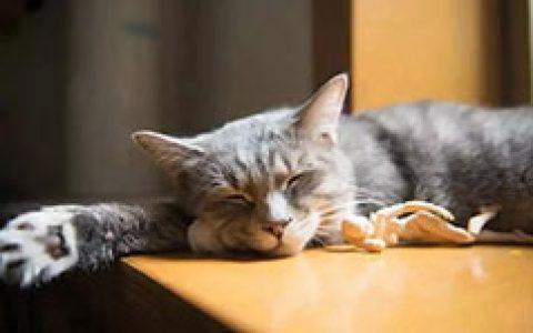 关于睡眠错误的九个知识点,大家需要了解